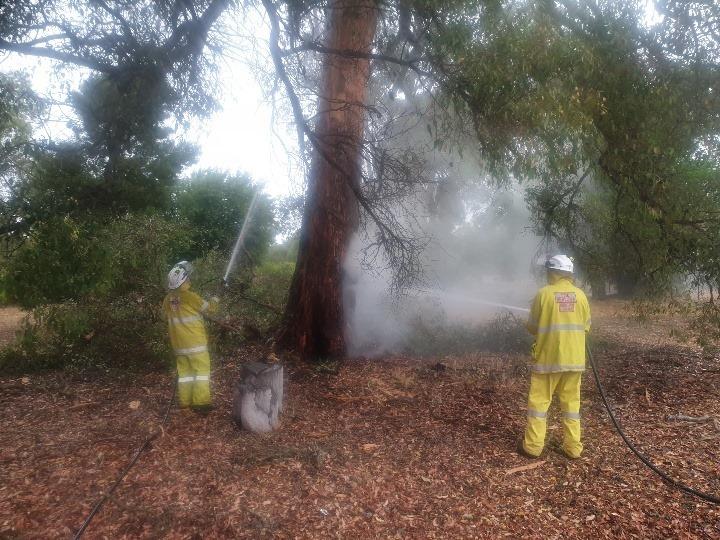 tree_fire